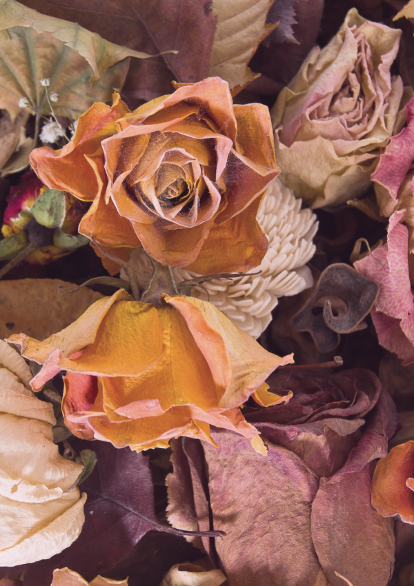 Using Dried Flowers in Feng Shui – Q and A